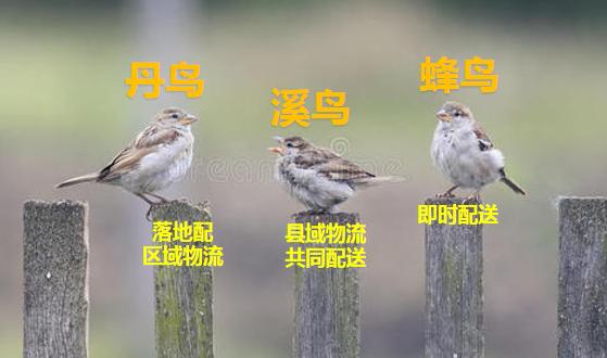 """阿里菜鸟的""""三鸟""""布局"""