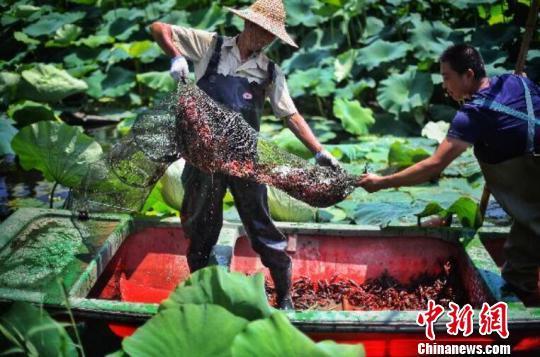 让网红小龙虾鲜遍全国 中国供应链创新满足消费热潮